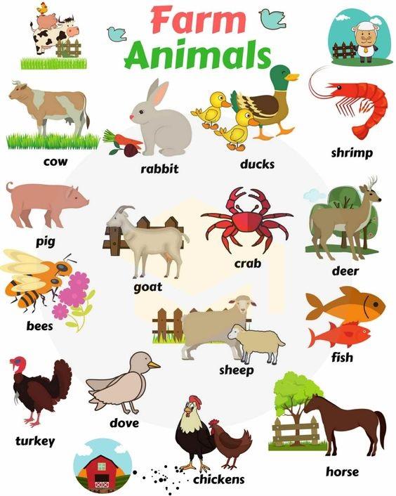 Tên gọi tiếng Anh của các loài vật trong nông trại