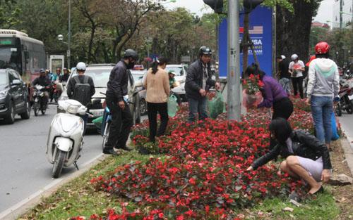 Người dân dừng xe lấy hoa trên đường Kim Mã. Ảnh: NK.