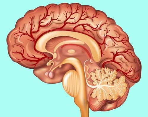 Kiến thức có thể bạn chưa biết về bộ phận trên cơ thể người - 3