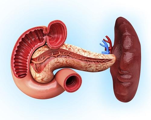 Kiến thức có thể bạn chưa biết về bộ phận trên cơ thể người - 4