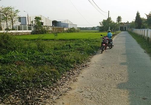 Nhiều diện tích đất vùng quê của Hoà Vang đang bị cò đẩy giá ảo. Ảnh. N.T.