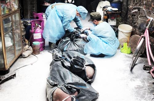Cơ quan chức năng mang lợn bệnh nhà ông Nguyễn Văn Chung, phường Lĩnh Nam, Hoàng Mai đi tiêu huỷ. Ảnh: NK.