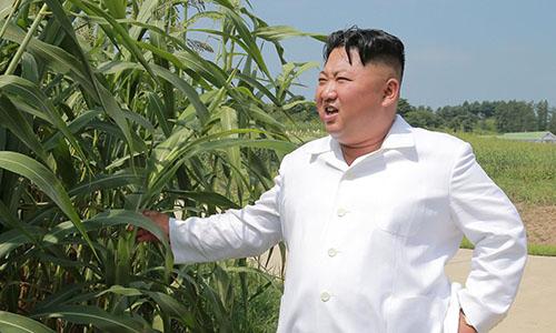 Lãnh đạo Triều Tiên Kim Jong-un đi thăm nông trang hồi tháng 8/2018. Ảnh: KCNA.