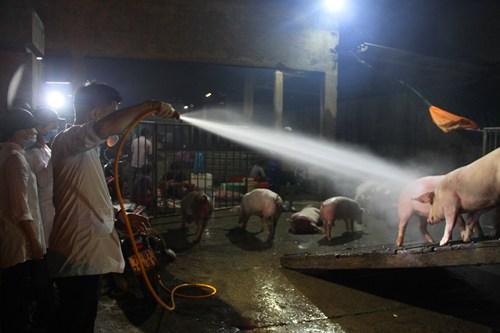 Lực lượng chức năng tiêu độc, khử trùng lợn trước khi giết mổ. Ảnh: Ngọc Minh