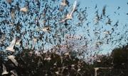 Ngôi nhà của 3 triệu con dơi trong rừng rậm Malaysia