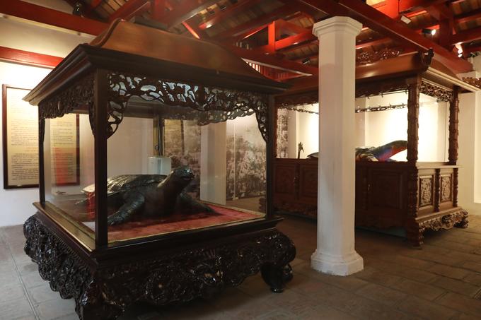 Tiêu bản rùa Hồ Gươm cuối cùng trưng bày ở đền Ngọc Sơn