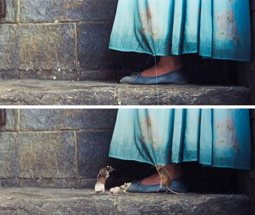 Không có chuột đâu nên đừng sợ nhé.
