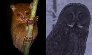 Những sinh vật có thể nhìn xuyên bóng đêm