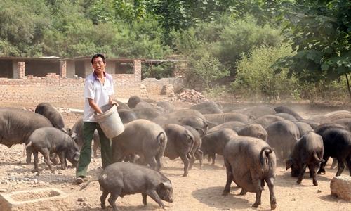 Một trang trại chăn nuôi lợn ở Trung Quốc. Ảnh: Reuters.