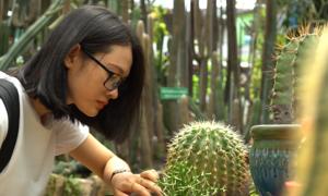 Vườn xương rồng hơn 3.000 cây ở Sài Gòn
