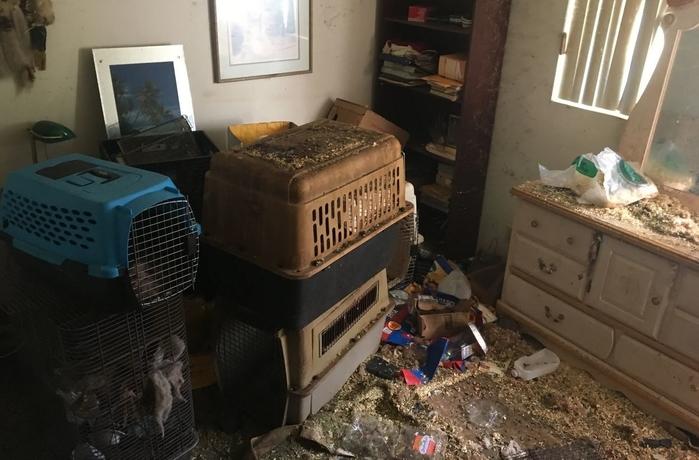 Nhà chức trách còn tìm thấy nhiều thú nuôi trong ngôi nhà đầy rác.