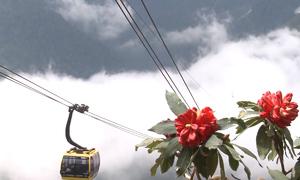 Lễ hội hoa đỗ quyên trên đỉnh Fansipan