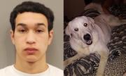 Chó cưng qua đời vì bảo vệ chủ khỏi tay súng ở Mỹ