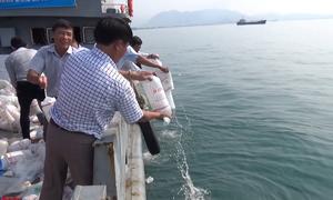 Ninh Thuận thả hơn 2,7 triệu con giống xuống biển
