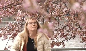 Người Mỹ hào hứng đi ngắm hoa anh đào ở thủ đô Washington