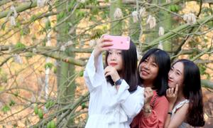 5 cây bông gòn ở Vũng Tàu thu hút du khách đến chụp hình