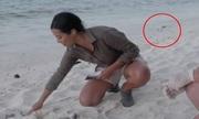 Mòng biển lao tới bắt rùa non trên sóng truyền hình trực tiếp