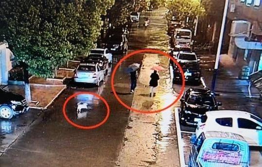 Lệ và Lư đi trộm xe, con chó cưng theo sau như thường lệ.