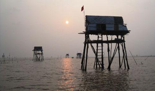 Các hộ dân nuôi ngao ở khu vực đảo Nẹ (Thanh Hoá) đang rất lo lắng khi giun biển ăn ngao xuất hiện. Ảnh: Lê Hoàng.