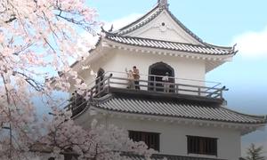 Mùa hoa anh đào mang lại hàng tỷ USD cho Nhật Bản