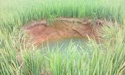 Hố sâu 5 m liên tục hút nước giữa ruộng