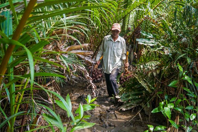 Lội vào đầm lầy hái dừa nước ở ngoại thành Sài Gòn