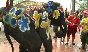 Voi nhún nhảy, phun nước trong lễ hội mừng năm mới ở Thái Lan