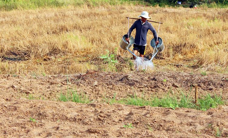 Hạn mặn đe dọa hàng nghìn hộ dân ở miền Tây. Ảnh: Cửu Long
