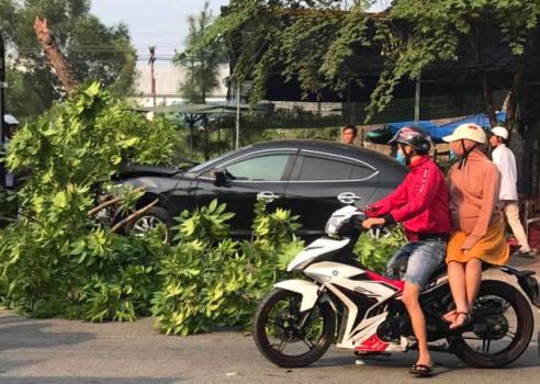 Sau khi đâm 3 xe máy, ôtô lao lên vỉa hè đâm gãy một cây xanh. Ảnh:V.A