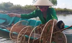 Bơi xuồng đặt bẫy lưới bắt tôm sú trong ao ở miền Tây