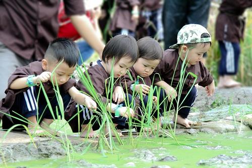 Các em được học cách gieo hạt, trồng cây.