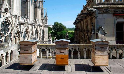 Ba tổ ong tại Nhà thờ Đức Bà Paris, Pháp. Ảnh: CNN.