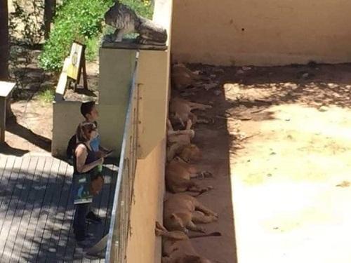 Sở thú mùa trốn nắng.