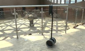 Robot livestream sở thú dành cho bệnh nhi