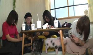 Uống cà phê cùng lợn con thu hút giới trẻ Nhật Bản