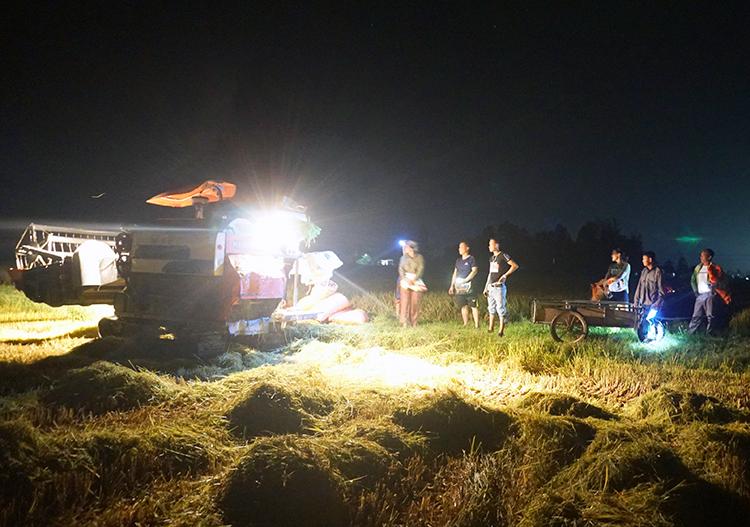 Nhiều người dân xuống đồng vào buổi đêm. Ảnh: Đức Hùng