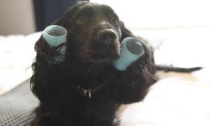 Spa 5 sao dành cho cún cưng tại Anh