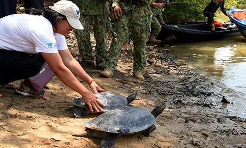 20 cá thể rùa hoàng gia được thả xuống sông Sre Ambel. Ảnh: AFP.