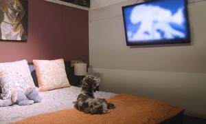 Khách sạn 5 sao dành cho cún cưng
