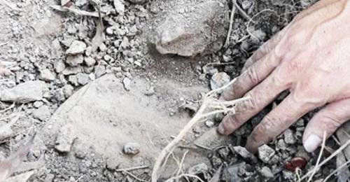 Một số hũ sành được tìm thấy quanh khuôn viên nhà máy nghi chứa xác thai nhi. Ảnh: Hoàng Hạnh.