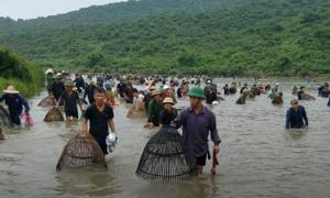 Hơn 300 người đua nhau bắt cá dưới đầm lầy