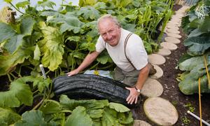 Vườn rau củ khổng lồ tại xứ Wales