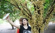 Vườn dâu trĩu quả đón hàng nghìn khách dịp lễ ở Đồng Nai