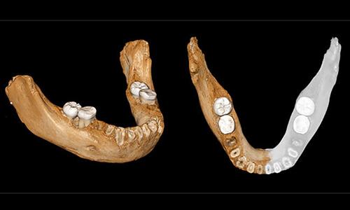 Xương hàm người Denisovađược tái cấu trúc từ mảnh xương ở Tây Tạng. Ảnh: Arab News.