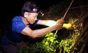 Nông dân Thanh Hoá nhử mồi câu ếch sau mưa
