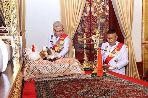 Hai quan chức hoàng gia đặt một con mèo và một con gà trống cạnh giường của Quốc vươngMaha Vajiralongkorntại Cung Chakrabat Bimantheomột nghi lễ trong lễ đăng quang hôm 4/5. Ảnh: Reuters