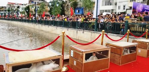 Hàng nghìn người dân đổ về 2 bờ sông Tam Bạc chứng kiến thành phố Hải Phòng cắt băng khánh thành dự án cải tạo tuyến sông này và thả thiên nga xuống tạo cảnh quan. Ảnh: Giang Chinh
