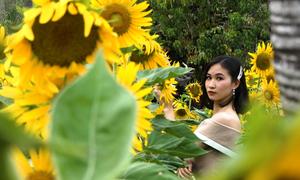 Vườn hoa hướng dương nở rộ trong công viên lớn nhất Sài Gòn
