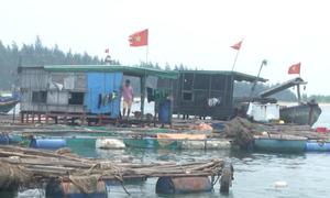 Hàng chục tấn cá tồn đọng, làng lồng bè Dung Quất chưa thể tháo dỡ