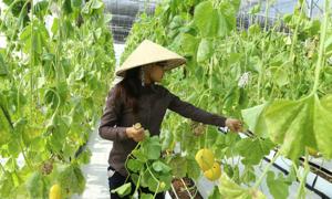 Sân chơi sáng tạo lĩnh vực nông nghiệp ở Đông Nam Bộ